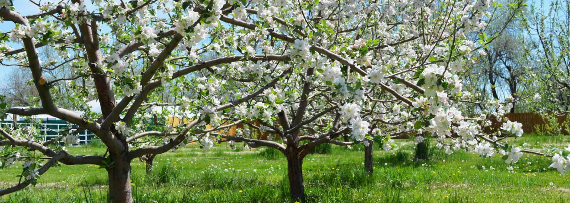 YA YA Farm & Orchard